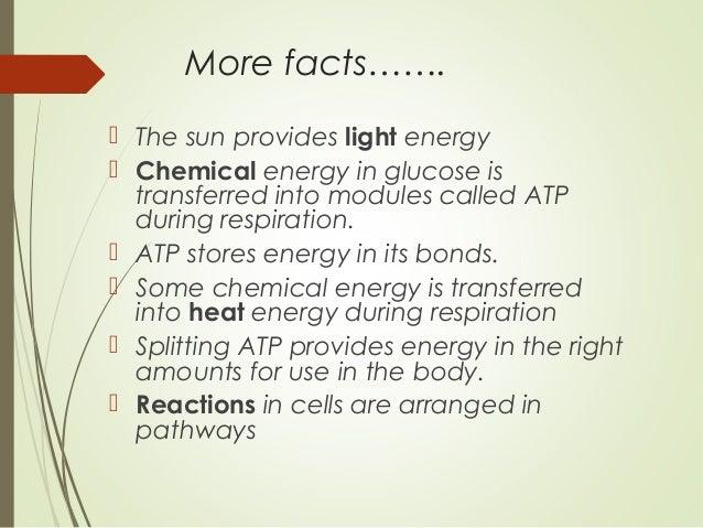8. More Factsu2026 Nice Look