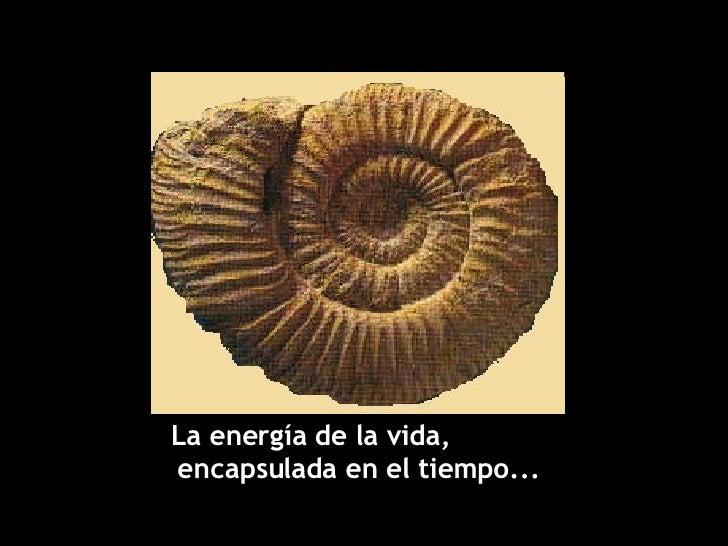 La energía de la vida,  encapsulada en el tiempo...