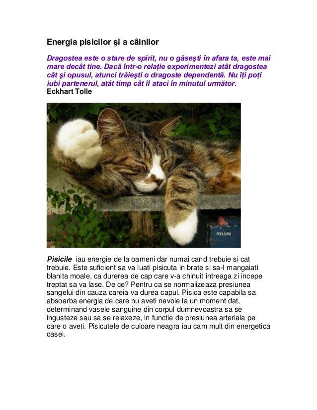 Energia pisicilor şi a câinilorDragostea este o stare de spirit, nu o găseşti în afara ta, este maimare decât tine. Dacă î...