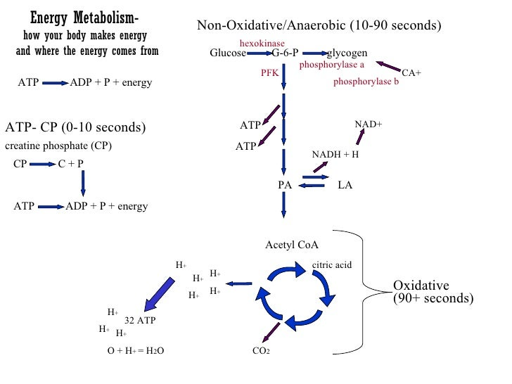 Energy Metabolism-  how your body makes energy  and where the energy comes from ATP  ADP + P + energy ATP- CP (0-10 second...