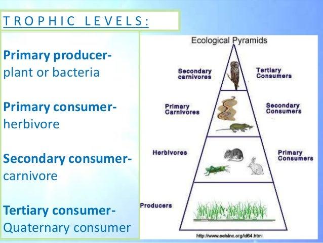 Quaternary Consumer Related Keywords - Quaternary Consumer ... Quaternary Consumer Examples