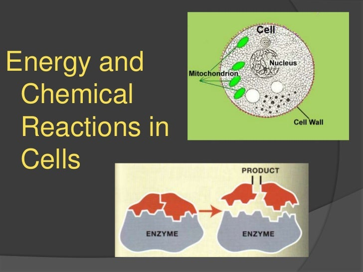 Energy and Chemical Reactions in Cells<br />