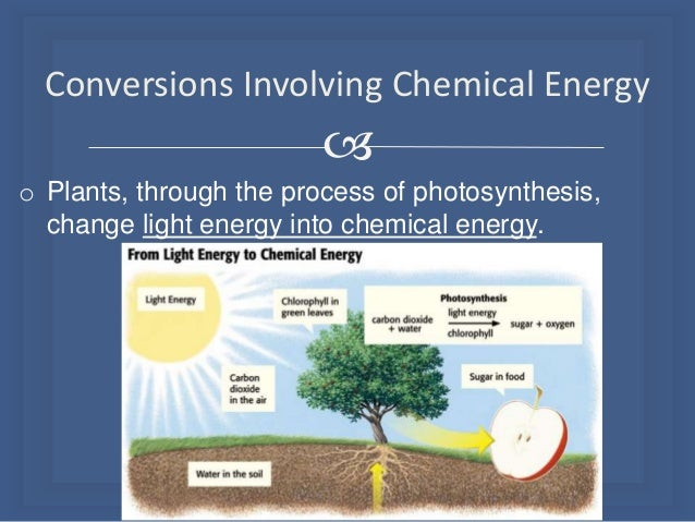 What Kind Of Energy Is Stored In Food We Eat