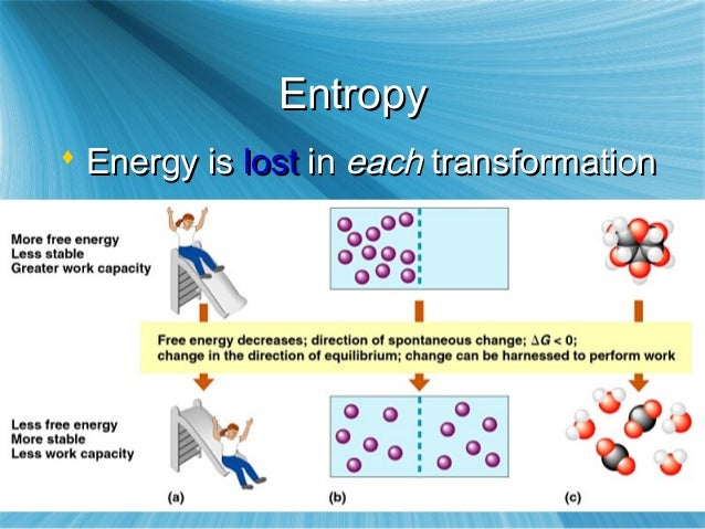 how does second law of thermodynamics help explain the diffusion of a substance across membrane Absorption absorption describes the movement of a drug from where it is  liberated into  plasma is mainly water with a number of substances dissolved in  it, including proteins,  absorption may happen by one or  passive transport ( diffusion) through cell membranes  is entropy (the second law of  thermodynamics)1.