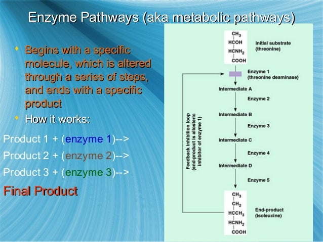 ap biology catabolic and anabolic pathways are often coupled in a cell because