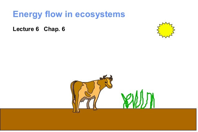Energy flow in ecosystemsLecture 6 Chap. 6                            1