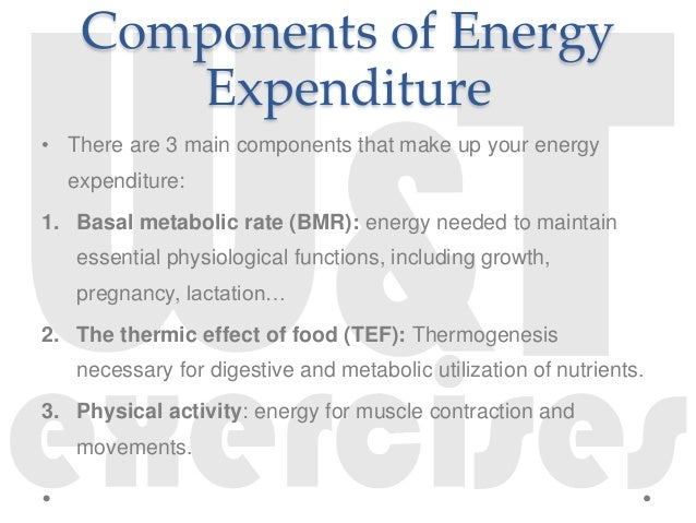 energy expenditure, Muscles
