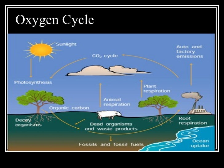 Energy flow in ecosystems carbon cycle 35 oxygen ccuart Choice Image