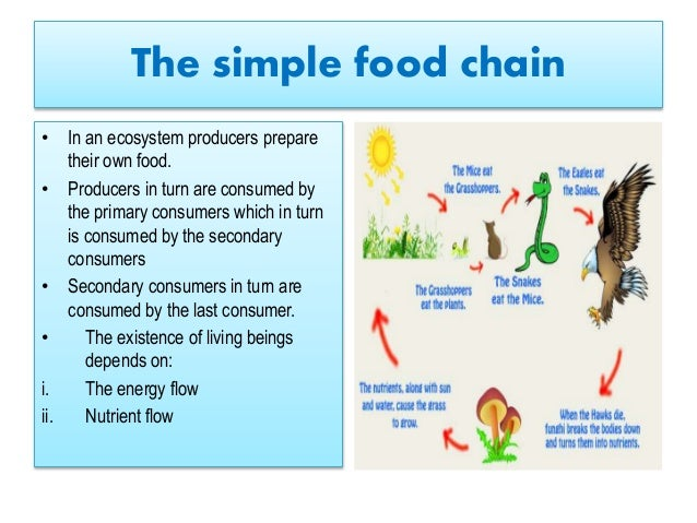 Energy flow and conservation of resources for Cuisine resources