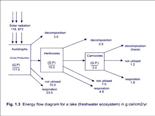 Energy flow by using energy models in ecosystem