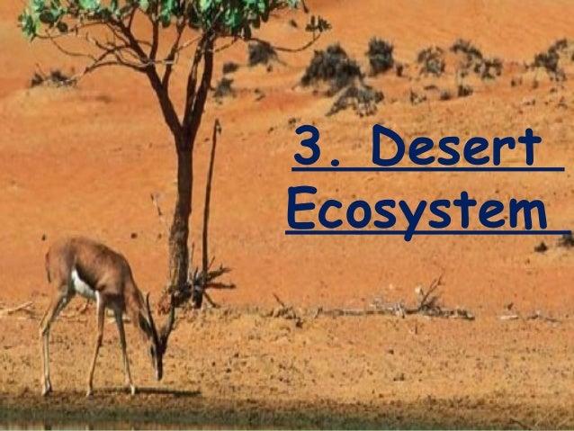 energy flow in desert ecosystem