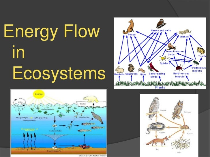 energy flow ecosystem In ecology, energy flow, also called the calorific flow, refers to the flow of energy through a food chain, and is the focus of study in ecological energeticsin an ecosystem, ecologists seek to quantify the relative importance of different component species and feeding relationships.