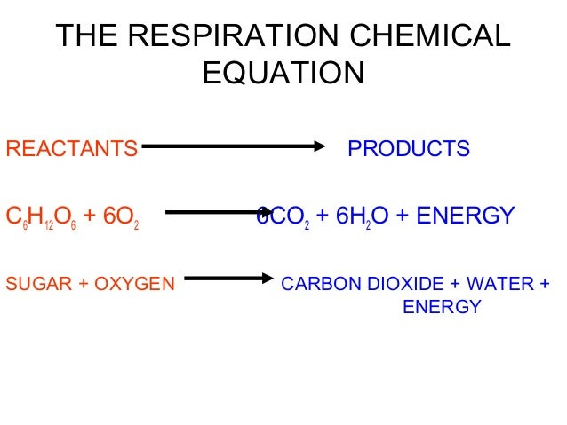 what are actually a reactants as well as goods about mobile phone respiration