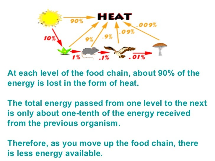 At each level of the food chain, about 90% of the energy is lost in the form of heat.   The total energy passed from one l...