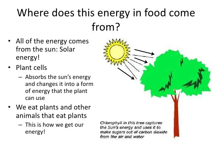 Animals Get Energy From Food Through The Process Of