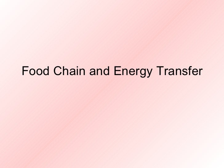 Food Chain and Energy Transfer