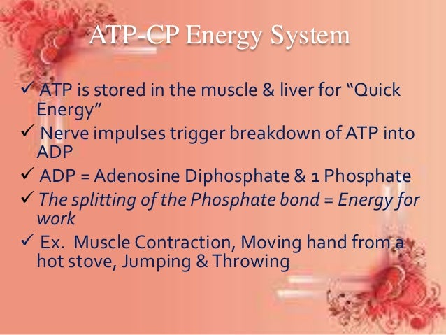 adenosine triphosphate the powerhouse of muscles Muscles are the instruments that power all movements made by the human body muscles are defined as being contractile tissues that are capable of extension and contraction to generate movement the body uses three different types of muscles.