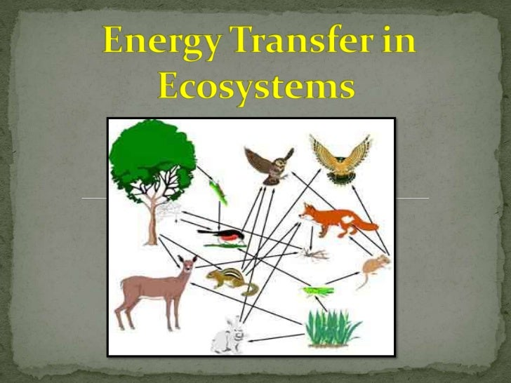  Energy enters the biosphere by photosynthesis. For some organisms, energy enters their part of the biosphere through the...