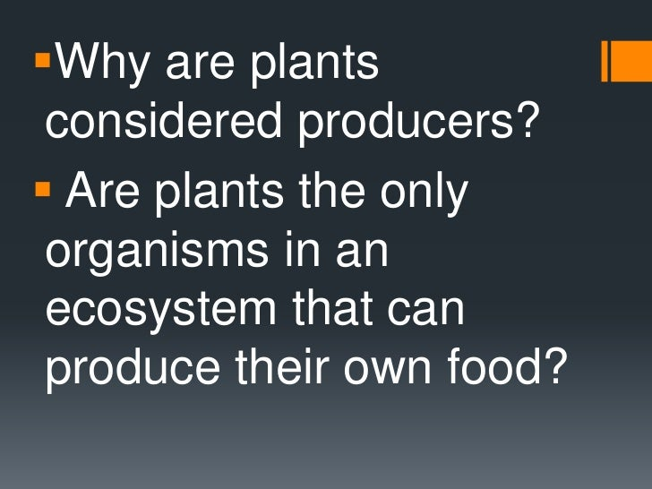 Why Can Cyanobacteria Make Their Own Food