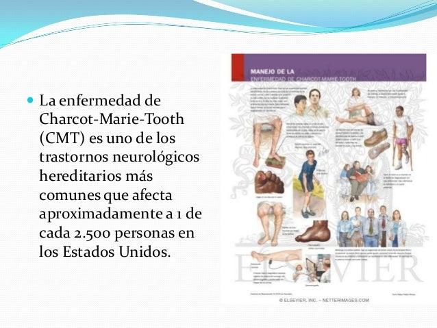  La enfermedad de Charcot-Marie-Tooth (CMT) es uno de los trastornos neurológicos hereditarios más comunes que afecta apr...