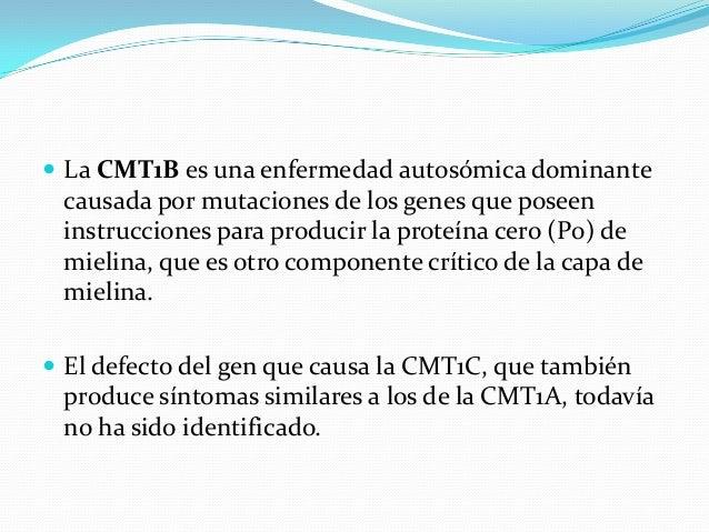  La CMT1B es una enfermedad autosómica dominante causada por mutaciones de los genes que poseen instrucciones para produc...