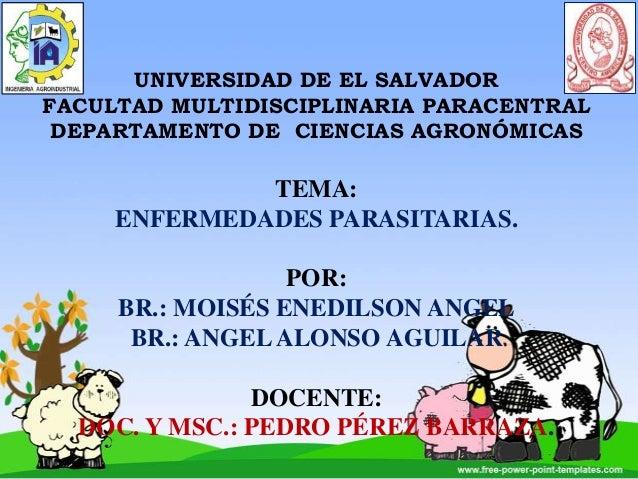 UNIVERSIDAD DE EL SALVADOR FACULTAD MULTIDISCIPLINARIA PARACENTRAL DEPARTAMENTO DE CIENCIAS AGRONÓMICAS  TEMA: ENFERMEDADE...