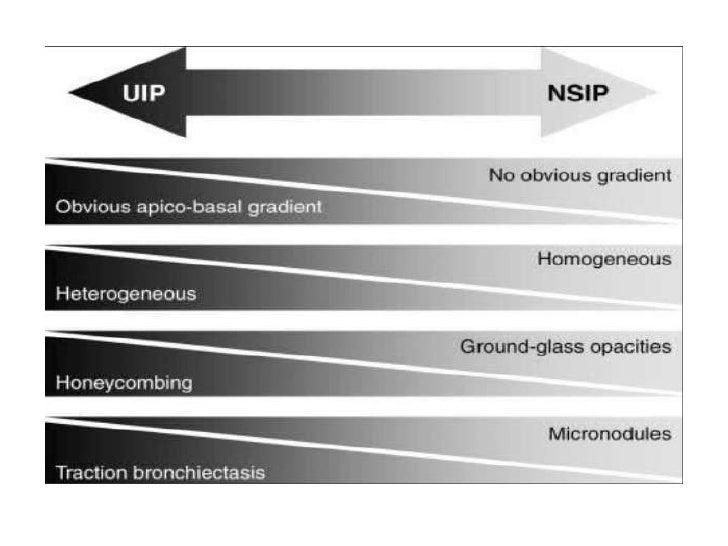 NIU: Histopatología<br />Focos fibroblasticos dispersos<br />Heterogéneo<br />Infiltrado inflamatorio mínimo en las aéreas...