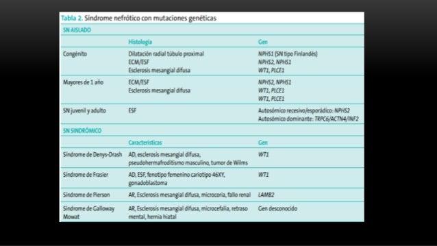 PATOGENIA SÍNDROME NEFRÓTICO Mecanismos inmunológicos  Las alteraciones de los linfocitos T, B y factores de permeabilida...