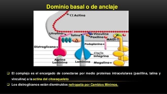 Hernando. Nefrología Clínica 4° edición - 2014 GN. DE CAMBIOS MÍNIMOS