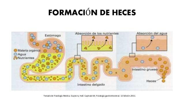 FORMACIÓN DE HECES Tratado de Fisiología Medica. Guyton y Hall. Capitulo 64; Fisiología gastrointestinal. 12 Edición.2011.