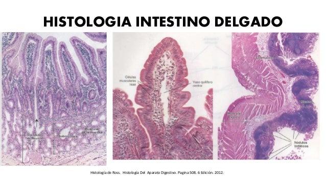 HISTOLOGIA INTESTINO DELGADO Histología de Ross. Histología Del Aparato Digestivo. Pagina 508. 6 Edición. 2012.
