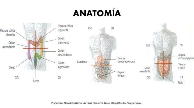 ANATOMÍA Prometheus Atlas de Anatomia. Lawrence Ross, Anne Gilroy. Editorial Medica Panamericana.