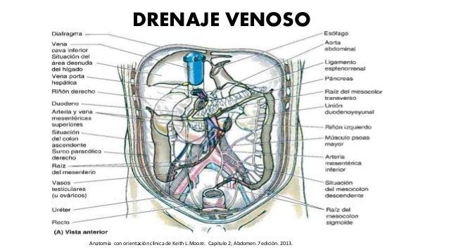 DRENAJE VENOSO Anatomía con orientación clínica de Keith L.Moore. Capitulo 2; Abdomen.7 edición. 2013.