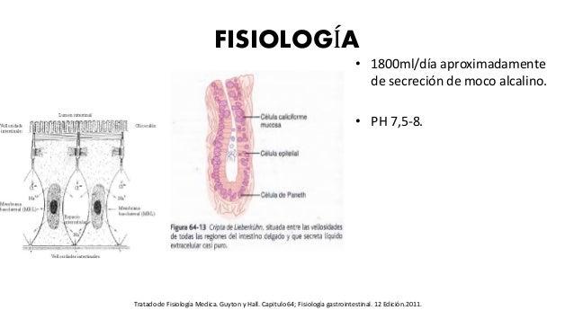 FISIOLOGÍA • 1800ml/día aproximadamente de secreción de moco alcalino. • PH 7,5-8. Tratado de Fisiología Medica. Guyton y ...