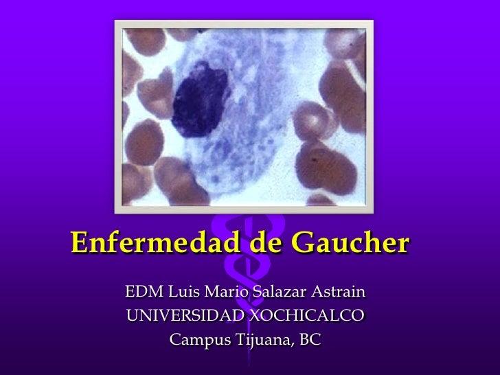 Enfermedad de Gaucher<br />EDM Luis Mario Salazar Astrain<br />UNIVERSIDAD XOCHICALCO<br />Campus Tijuana, BC<br />