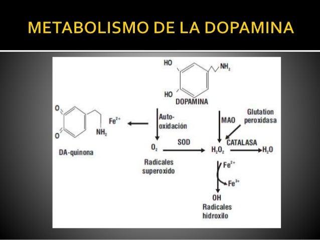 Liberacion absorcion distribucion metabolismo eliminacion