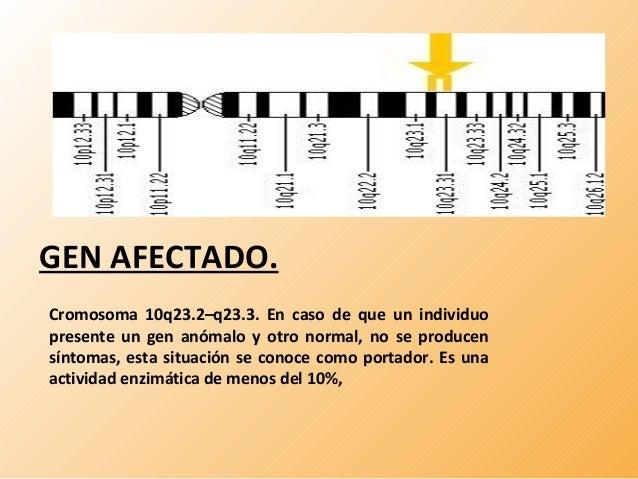 GEN AFECTADO.  Cromosoma 10q23.2–q23.3. En caso de que un individuo  presente un gen anómalo y otro normal, no se producen...