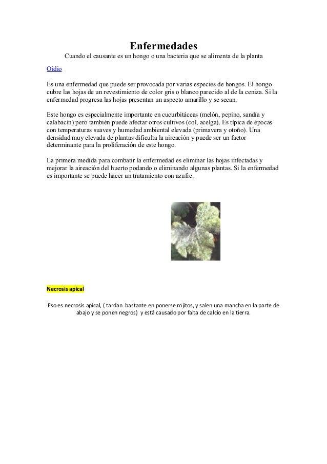 Enfermedades Cuando el causante es un hongo o una bacteria que se alimenta de la planta Oidio Es una enfermedad que puede ...