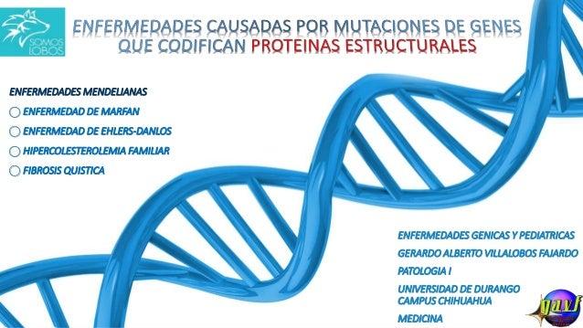 ENFERMEDADES GENICAS Y PEDIATRICAS GERARDO ALBERTO VILLALOBOS FAJARDO PATOLOGIA I UNIVERSIDAD DE DURANGO CAMPUS CHIHUAHUA ...