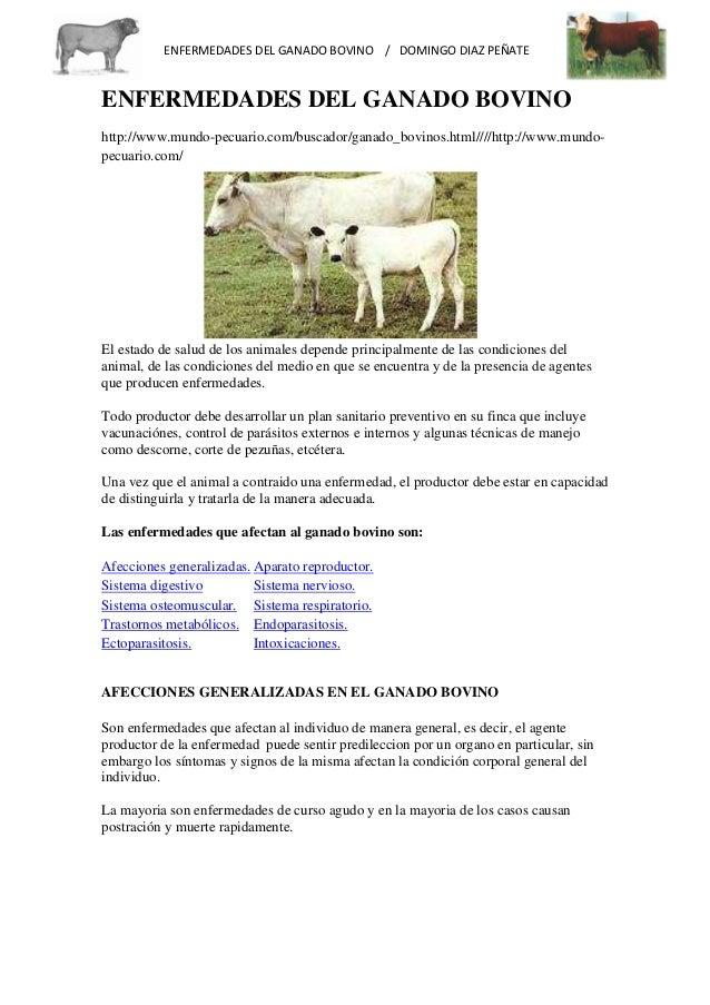 Enfermedades del-ganado-bovino Slide 2