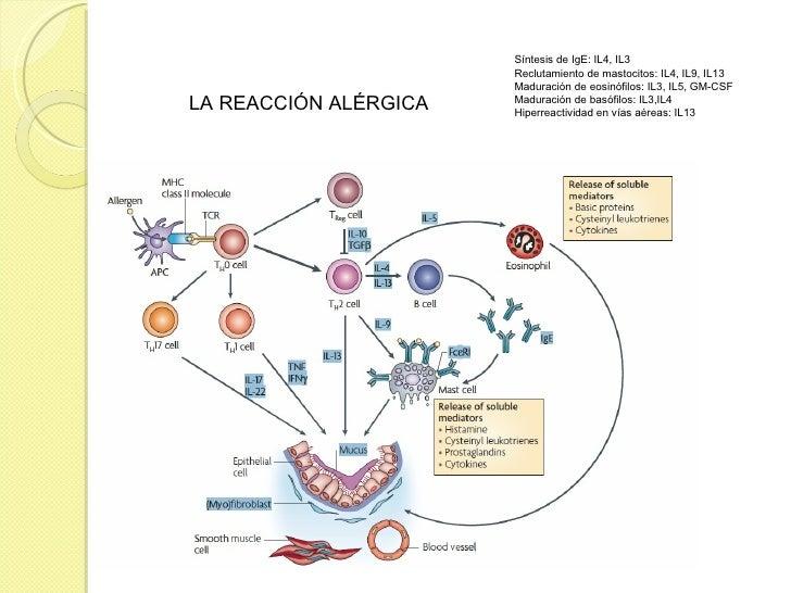 Enfermedades Alergicas Riesgodefractura Com