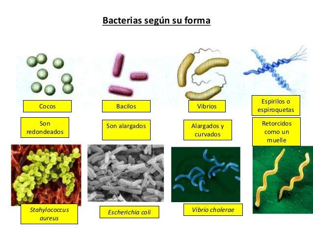 Resultat d'imatges de enfermedades bacterianas