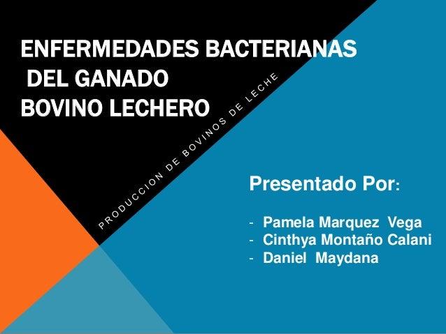 ENFERMEDADES BACTERIANAS DEL GANADO BOVINO LECHERO Presentado Por: - Pamela Marquez Vega - Cinthya Montaño Calani - Daniel...