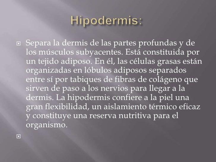 Hipodermis:<br />Separa la dermis de las partes profundas y de los músculos subyacentes. Está constituida por un tejido a...