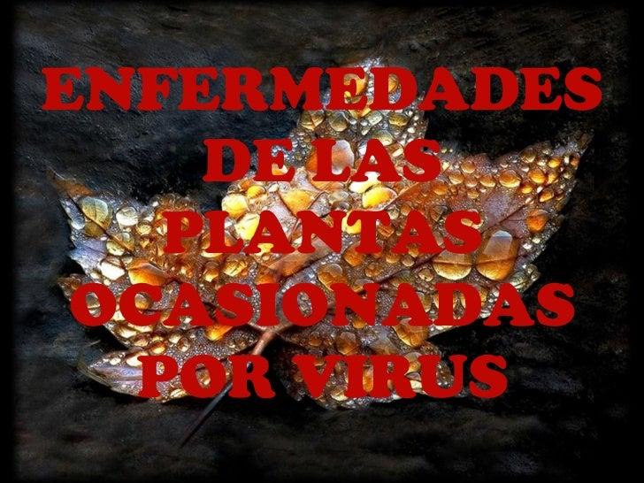 ENFERMEDADES DE LAS PLANTAS OCASIONADAS POR VIRUS