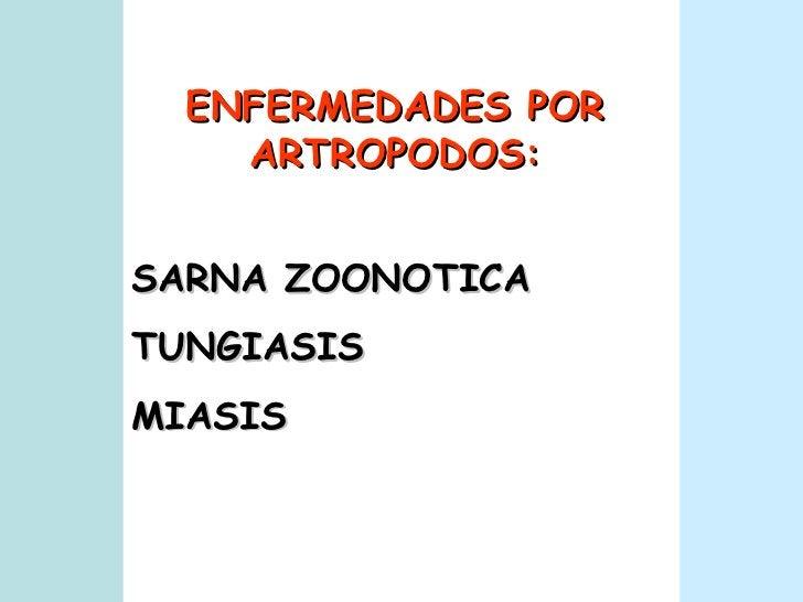 SARNA ZOONOTICA TUNGIASIS MIASIS ENFERMEDADES POR ARTROPODOS: