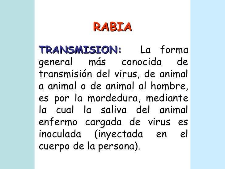 RABIA TRANSMISION:   La forma general más conocida de transmisión del virus, de animal a animal o de animal al hombre, es ...