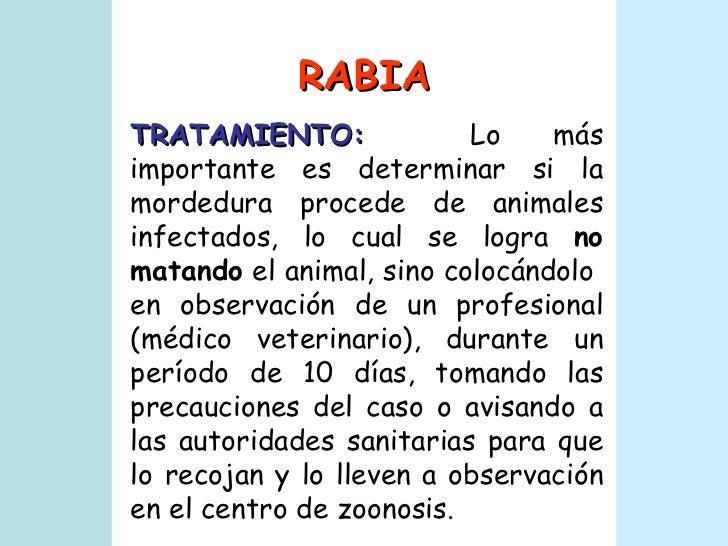 RABIA TRATAMIENTO:   Lo más importante es determinar si la mordedura procede de animales infectados, lo cual se logra  no ...