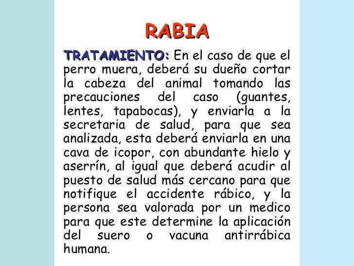 RABIA TRATAMIENTO:  En el caso de que el perro muera, deberá su dueño cortar la cabeza del animal tomando las precauciones...