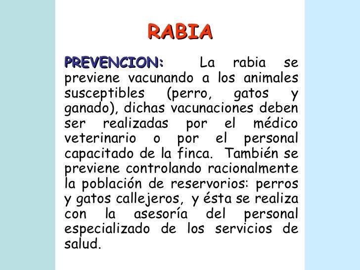 RABIA PREVENCION:   La rabia se previene vacunando a los animales susceptibles (perro, gatos y ganado), dichas vacunacione...